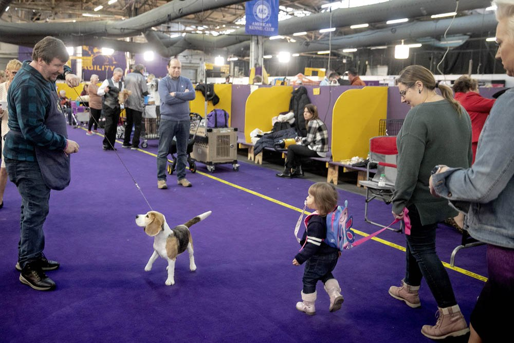 """HONORABLE MENTION - Aristide Economopoulos – NJ Advance Media – """"2020 Westminster Dog Show"""""""